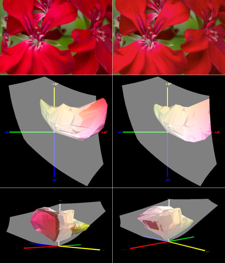 red-flower-clipping-prophoto-to-srgb